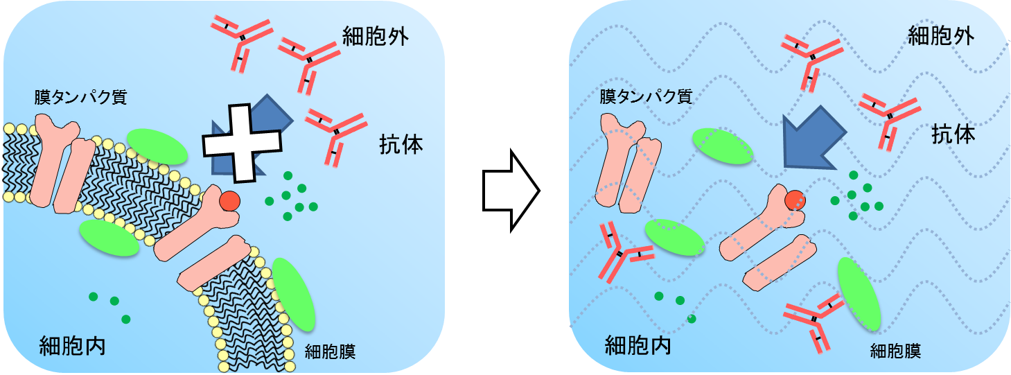 Antibody_easy_to_access.png